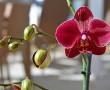 Miért nem virágzik az orchidea? Ezt kell tenned, hogy újra virágba boruljon!