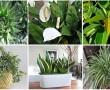 Íme az oxigénboma növények! Már egy elég a hálószobádba, hogy tökéletesen megtisztítsa a levegőt