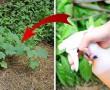 Permetezd be ezzel a házi szerrel a kerted és egész nyáron nem lesz gondod a gyomokkal!