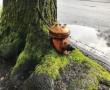 Íme a bizonyíték, hogy a fák mindent túlélnek! 30 kép arról, amit lehet nem fogsz majd elhinni!