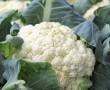 Mentsd el ezt a táblázatot! Nagy hasznát fogod venni! Szezonális zöldség-gyümölcs naptár, Zöldségek, gyümölcsök és fűszernövények betakarítási ideje és tárolhatósága az évkörben!