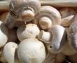 A gombában lévő speciális anyagok segítenek testünknek, a rák elleni küzdelemben